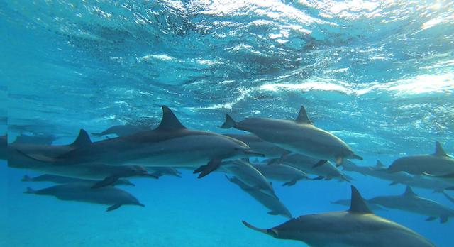Dolfijnen duik / snorkel Safari Fun Diving 24 t/m 31 mei 2020